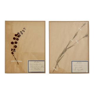 Vintage Pressed Botanicals - A Pair