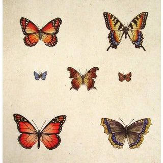 Butterflies by Sandy Scott Etching