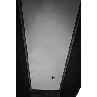 Jason Mageau Lone Bird in Los Angeles Photograph