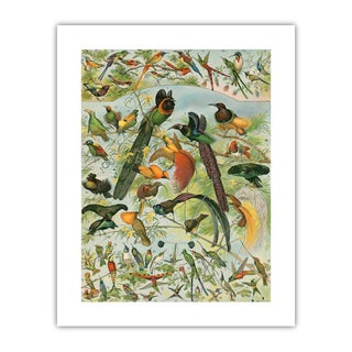 Antique 'Hummingbirds & Friends' Archival Print