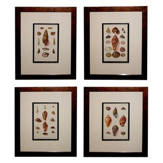 A Well-Executed Set of Four English Shell Lithographs