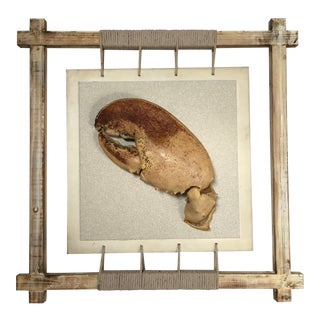 Rustic Framed Mounted Giant Lobster Claw