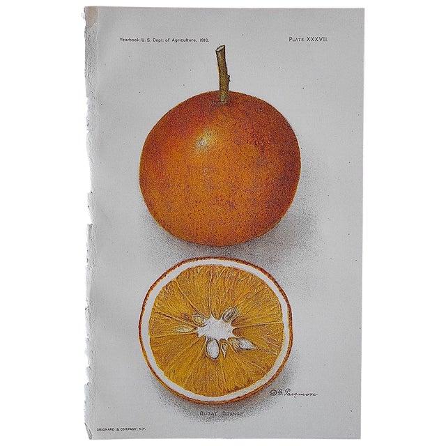 Antique Dugat Orange Lithograph - Image 1 of 3