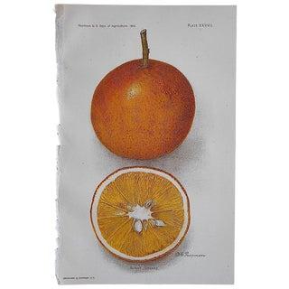 Antique Dugat Orange Lithograph