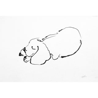 Sleeping Pup Drawing
