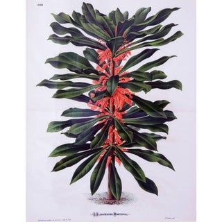 "Set of Six French Botanical Copper Lithographs from ""L'illustration Horticole"""