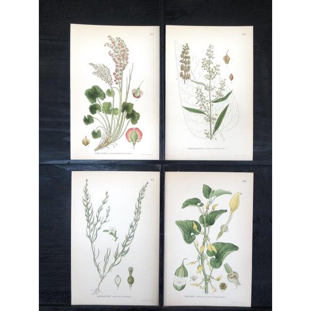 Swedish Floral Prints - Image 2 of 6