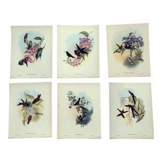 John Gould Hummingbird Lithographs, 1940s - Set of 6