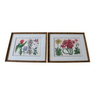 Custom Framed Botanical Art - A Pair