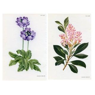 Vintage Curtis Botanical Prints - A Pair