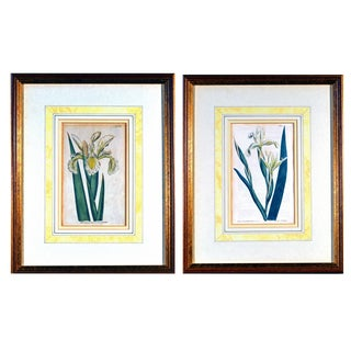 Pair of William Curtis Botanical Engravings of Irises