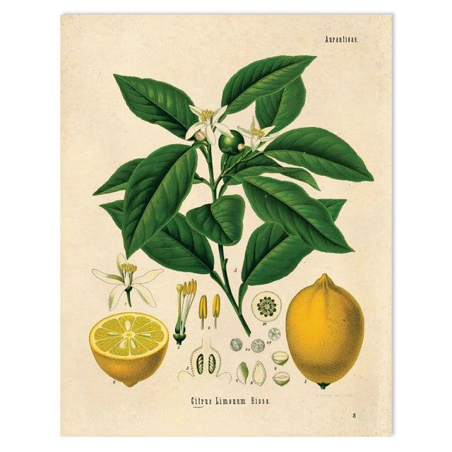 Botanical Lemon Citrus Fruit Print Poster - Image 1 of 3