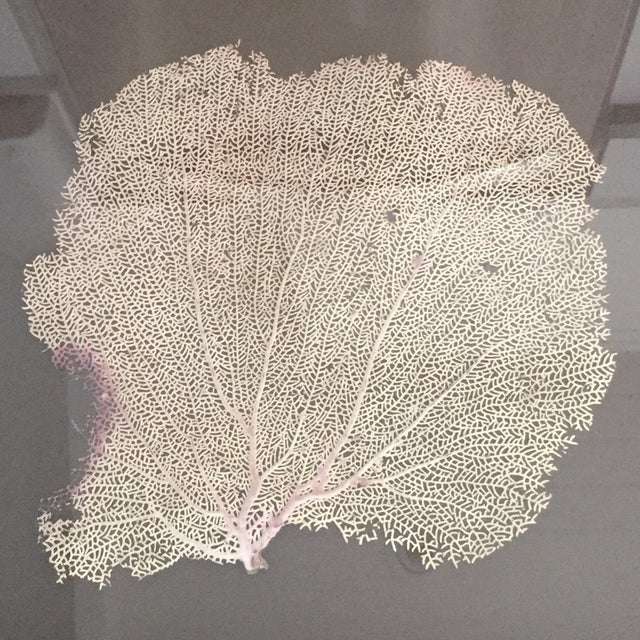 Coral Sea Fan in Bamboo Frame - Image 4 of 5