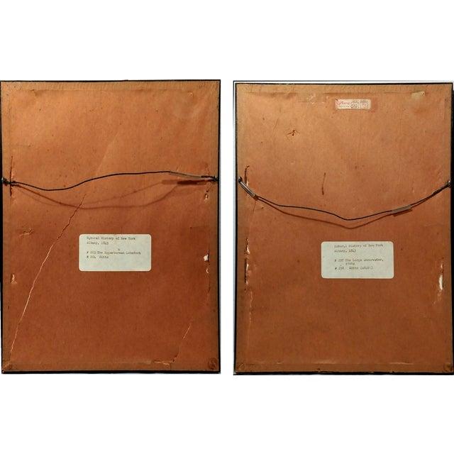 Antique Natural History of NY Bird Prints - A Pair - Image 9 of 9