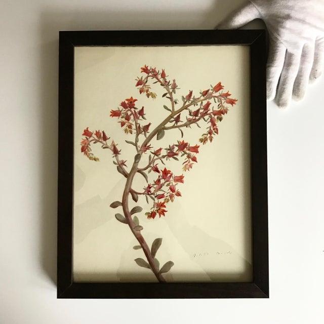 Framed Rock Plants - Set of 32 - Image 5 of 11