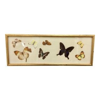 Vintage Gold Framed Butterfly Art