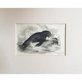 Late 19th Century Arctic Seal Lion Lithograph