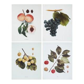 Large Antique Fruit Plates, Set of 4