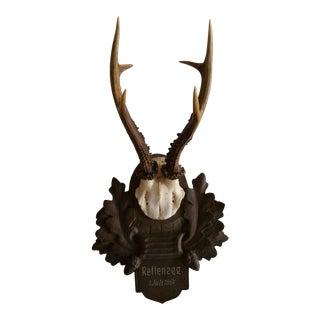 Vintage Roe Deer Antlers