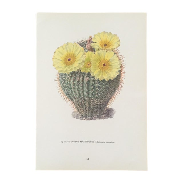 Vintage Succulent Cactus Print - Image 1 of 4