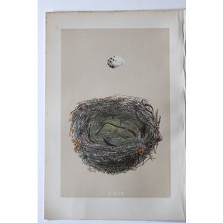 """XXIX"" 1875 Hand-Colored Birds Nest Engraving"