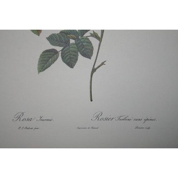 Original Pierre Redouté Botanical Prints - S/3 - Image 3 of 8