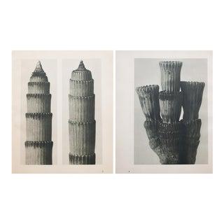Karl Blossfeldt Double Sided Photogravure N3-4