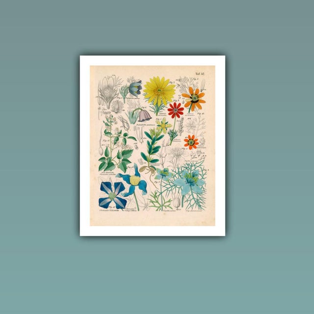 Antique 'Botanical Plate' Archival Print - Image 3 of 4