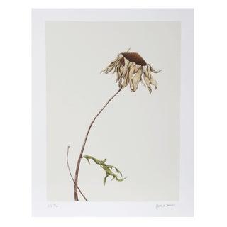 Paul Arthur Jansen - Dry Daisy Lithograph