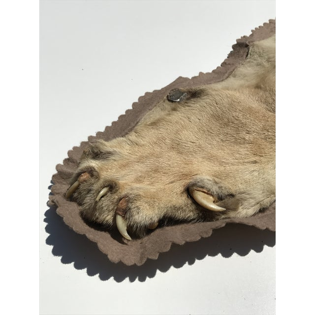 Lion Taxidermy Rug - Image 7 of 10