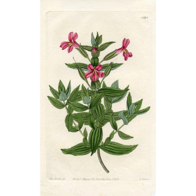 Botanical Print - Monkeyflower, 1833 - Image 1 of 3