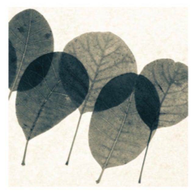 Sarreid LTD Transparent Leaf Giclee Print - Image 3 of 4