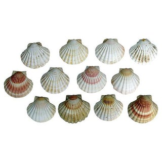 Natural Shell Serving Dishes - Set of 12