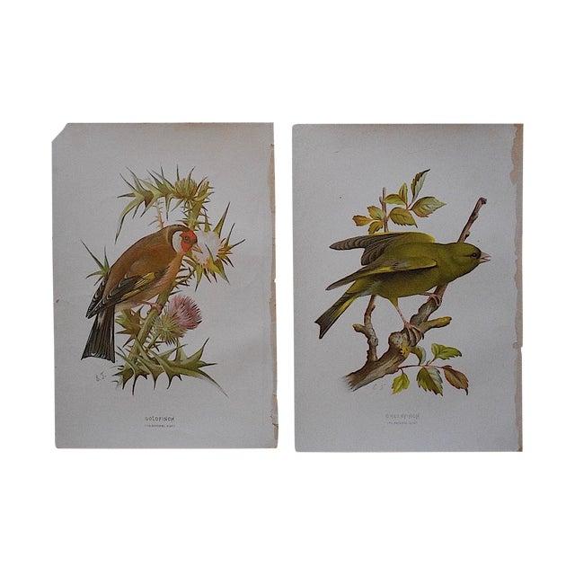 Antique Bird Lithographs - Pair - Image 1 of 3