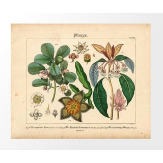 Vintage German Garden Flowers Archival Print
