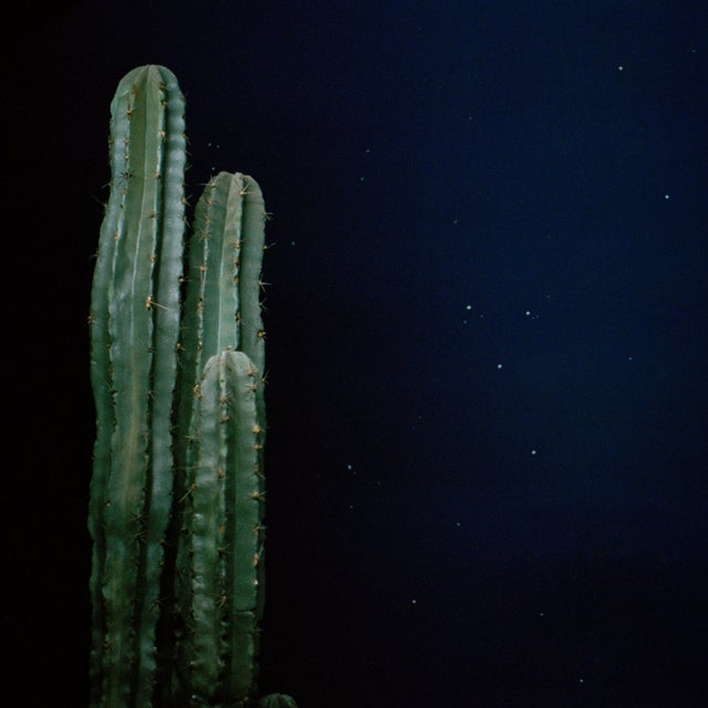Image of Cactus Night Photograph
