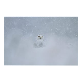 KLEMENS GASSER / THERE WILL BE SNOWY OWLS WITHOUT YOU 20131210 10.05AM