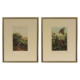 Gold Framed Bird Chromolithograph Prints - A Pair