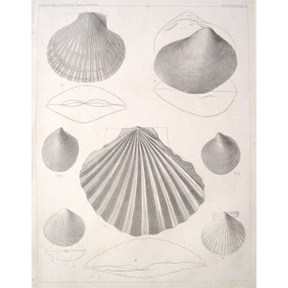 Shell Lithograph, U.S. Pacific Railroad Expedition