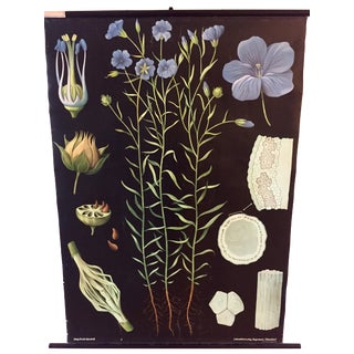 1969 Jung-Koch-Quentell Flax School Wall Chart