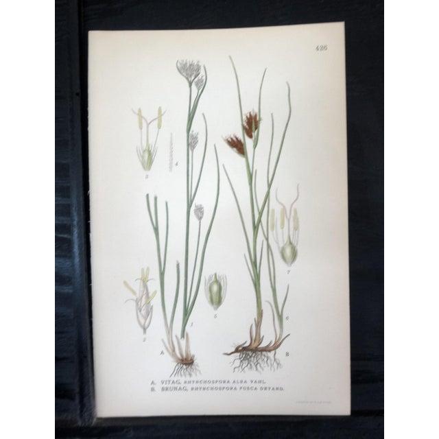Swedish Floral Prints, Set of 4 - Image 4 of 6