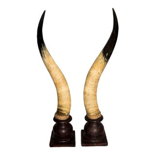 Dramatic Pair of Mounted Large-Scale Scottish Longhorn Cow Horns, 19th Century
