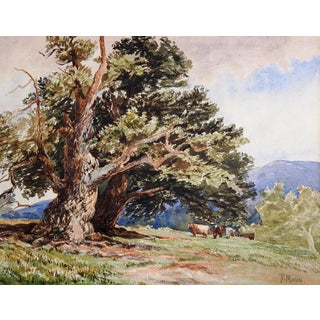 Pastoral Oak & Cows Landscape Watercolor