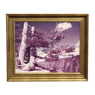 Framed Purple Hued Scenic Photo
