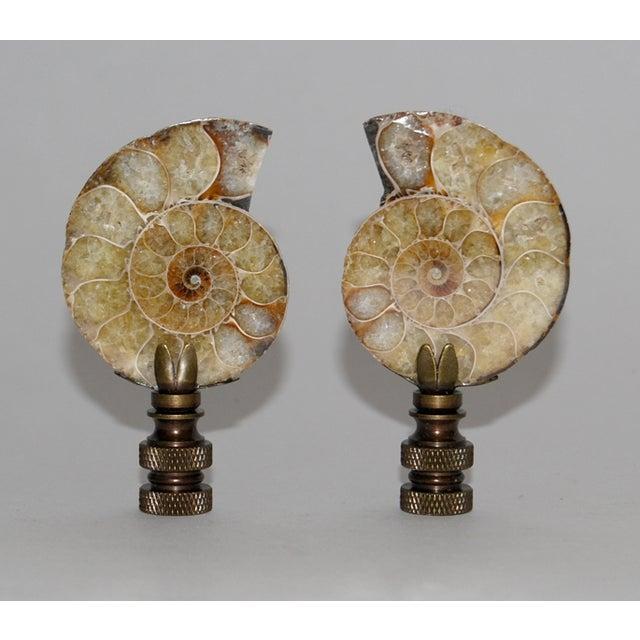 Ammonite Finials - Image 2 of 3