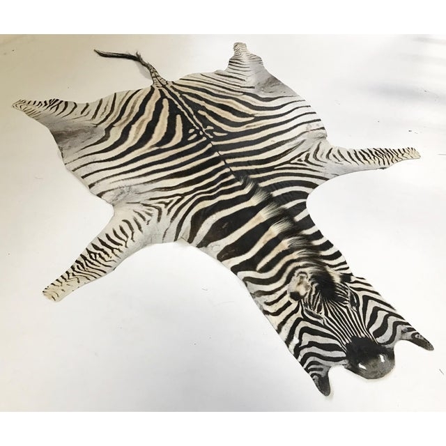 "Natural Zebra Hide Rug - 6' x 7'9"" - Image 2 of 4"