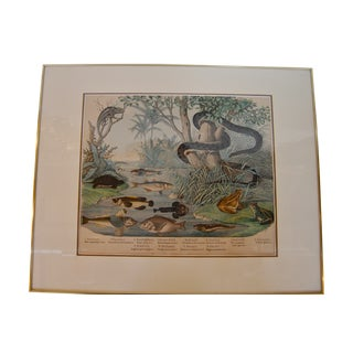 19th C. German Reptile Species Framed Print