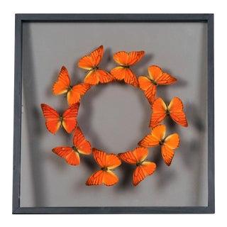 Vintage Sarreid Ltd Butterflies Collection