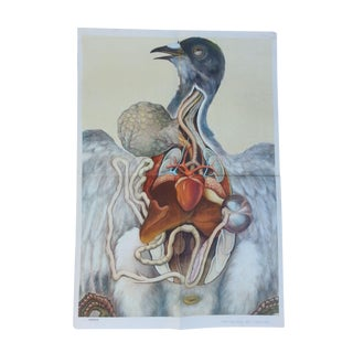 Vintage Anatomy Science Poster - Bird