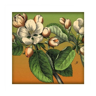 Antique 'Blossoms' Archival Print